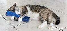 Tout savoir sur l'herbe à chat : cataire, valériane…