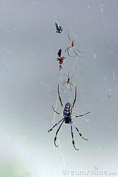 Spiders.....more like mortal nemesis!