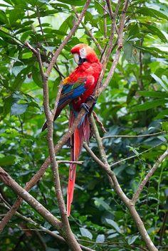 New Wonderful Photos: Ecuador Proud Parrot