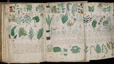 Dos informáticos afirman haber descifrado el famoso manuscrito Voynich