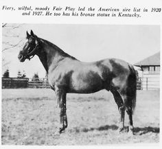 Fair Play, Man O' War's Sire He is also in War of Wills Pedigree Quarter Horses, American Quarter Horse, Beautiful Horses, Animals Beautiful, Man Of War, Sport Of Kings, Thoroughbred Horse, Racehorse, Horse Love