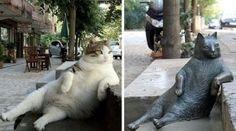 Tombili, un carismático gato callejero de Estambul, ya tiene su propia estatua