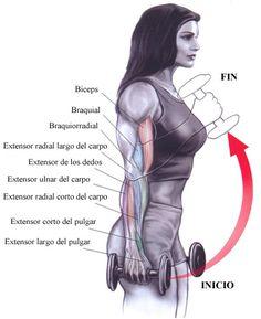 Hoy los ejercicios que vamos a mostrar son el curl tipo martillo, para fortalecer los brazos. Aquí os dejamos la explicación y un video.