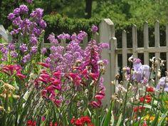 Fragrant garden and wild flowers garden look