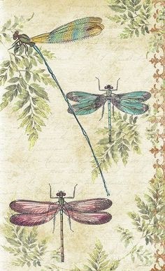 Dragonflies In The Art Print by Jean Plout. All prints are professionally printed, packaged, and shipped within 3 - 4 business days. Choose from multiple sizes and hundreds of frame and mat options. Dragonfly Drawing, Dragonfly Art, Dragonfly Tattoo, Dragonfly Wallpaper, Dragonfly Illustration, Dragonfly Images, Vintage Paper, Vintage Art, Illustration Botanique