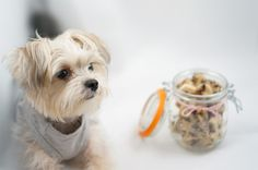Carob chip Cookies dog treats recipe