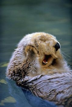 The 21 Happiest Otters Ever Are Here To Brighten Your Day  Otter wallpaper