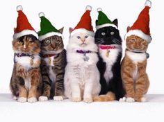 #cats wearing #santaclaus #hats at #christmas #fatherchristmasletters www.fatherchristmasletters.co.uk/pinterest