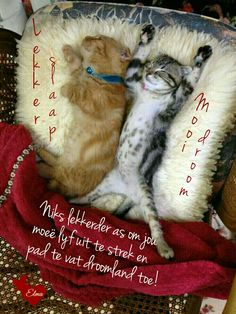 Good Night Wishes, Good Night Sweet Dreams, Good Night Quotes, Day Wishes, Animals And Pets, Funny Animals, Goeie Nag, Afrikaans Quotes, Daily Thoughts