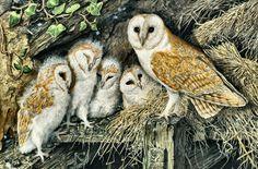 Barn Owl Family | Barn Owl Family F - raptor, painting, bird, animal, barn owl, avian ...
