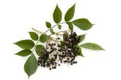 Elderberry and blackberry cordial