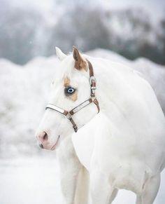 (82) Horseaddict - Photos