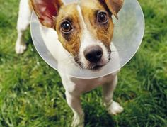 The Cone of Shame :)