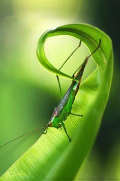 grasshopper yoka :).