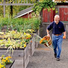 Jerry Finkelstein amongst his raised beds.  Wide negotiable paths & taller raised beds= accessibility