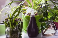 houseplants on a window sill with water spray