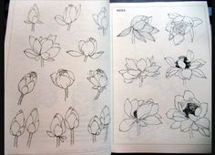 Tatoo inspirations chinese lotus drawing book