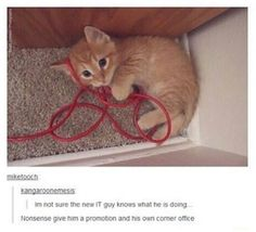 I'd hire this kitty in a heartbeat