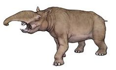 The Pyrotheria are a group of extinct mammals that lived during the Eocene and Oligocene in South America and had some similarities with the elephants. But they were not related to this, but are counted to the South American ungulates.