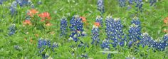 Texas Jobs Heres your chance to see the desert flowers bloom! Work at Big Bend National Park - season runs February - June, or see if one of their year-round positions might be what youre looking for. Summer camp jobs also available in the Texas hill country.