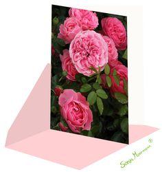 Die Rosenkarte ist ohne Text und eignet sich für verschiedene Anlässe. Pink Roses, Thanks Card, Joie De Vivre, Birth