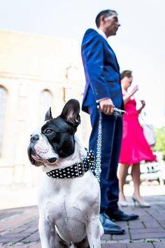 Foto von oskar the dog