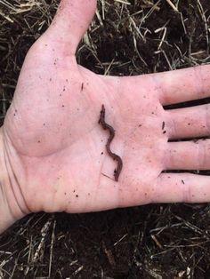 Raising Worms – Old Man Stino