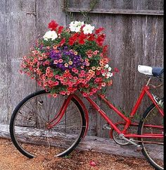flowers on a bike ~ leaning against an old potting shed [previous pinner's caption, slightly modified]