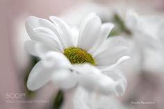 flower by kusoksveta
