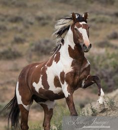 Sand Wash Basin Wild Horses | Wild Horses: The Proposed Destruction of the Sand Wash Basin Herd ...