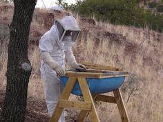 Bee Keeping!