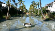 The Windflower Spa and Resort, Mysore@Hotel