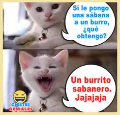 Funny Spanish Jokes, Mexican Funny Memes, Spanish Humor, Funny Internet Memes, Stupid Funny Memes, Wtf Funny, Funny Cats, Clean Jokes, Funny People