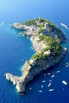 island of the blue dolphins - Google Search