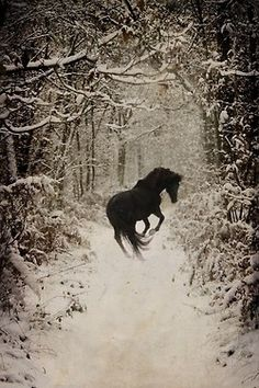 Black Horse in the Snow.