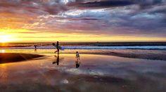 Sunset  surf & dogs