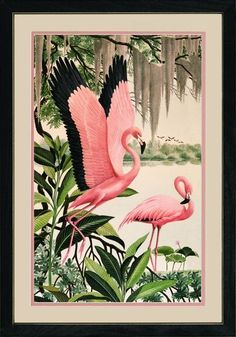 Vintage Flamingo Art - Pink, green, and black trim. card making color inspiration for flamingos and tropical vegetation . Flamingo Rosa, Pink Flamingos, Flamingo Decor, Flamingo Bathroom, Flamingo Painting, Vintage Florida, Pink Bird, Kitsch, Bird Feathers