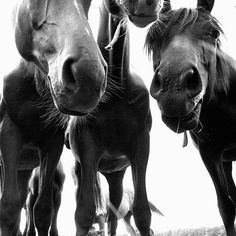 :) I love their swishy noses. It's what I love with my horses.