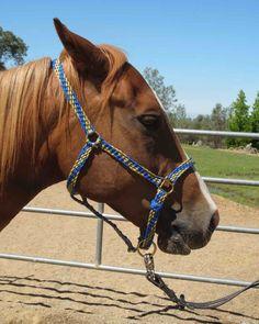 Braided Horse Halter. :D