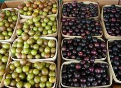 What to do with muscadine/scuppernong grapes from my farmers basket? Grape hand pies.