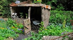 so cute..child's garden in Wales. Love the old pram!
