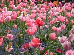 Photo of Paris Giverny and Monet's Garden