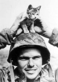 Marine Cpl. Edward Burckhardt found this kitten at the base of Mount Suribachi, Iwo Jima, the scene of some of the most brutal fighting of world war 2. February 1945. Mount Suribachi, Marine Corps History, Iwo Jima, Army Soldier, Cool Cats, Rescue Dogs, Troops, World War Ii, Marines