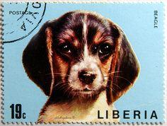 Liberia.  BEAGLE.  Scott 672 A233, Issued 1972 Apr 15, Perf. 13 1/2, litho., 19. /ldb.