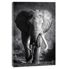Tableau Photo L'Elephant Perdu