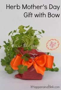 Herb Mothers Day Gift with Bow  Bowdabra Blog