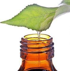 Tea Tree Body Scrub Sugar or Sea Salt Body by CedarCreekSoaps1, $9.75