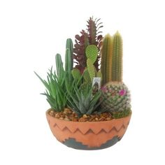 Amazon.com : Large SouthWest Cactus Garden - Terrarium, Centerpieces,... (€14) ❤ liked on Polyvore featuring fillers, plants, flowers, decor and nature