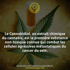 Citation Love, Ergo Proxy, Good To Know, Did You Know, Jolie Phrase, Learn To Meditate, Cbd Hemp Oil, Zen Meditation, Humor