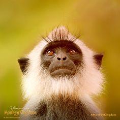 This is my best angle. #MonkeyKingdom #TGIF